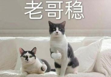 澳门真人娱笑,2020中国人民银行《经济金融》又双叒叕遮盖了