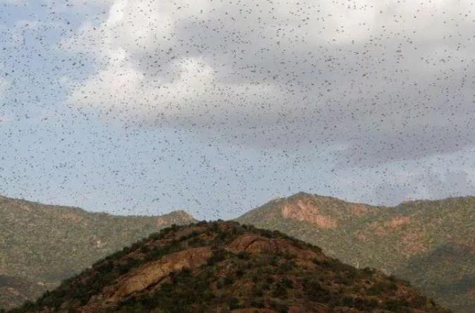 2020年省考申论热点:4000亿只蝗虫