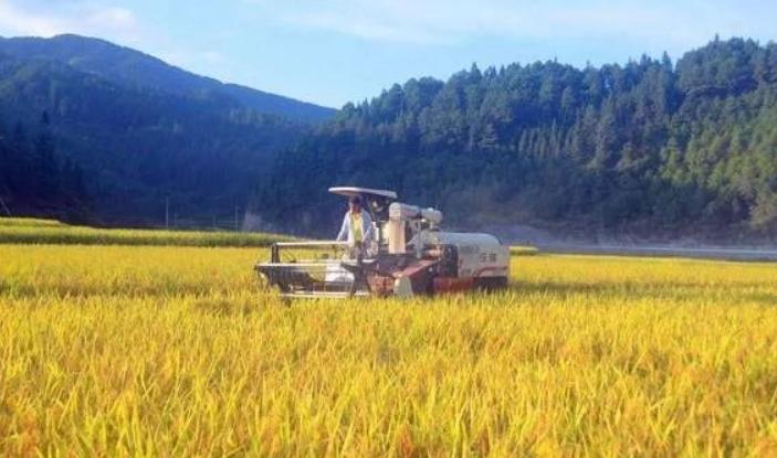 疫情可能导致粮食短缺?北京粮食充