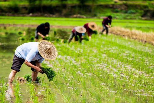 建议建立农民退休制度